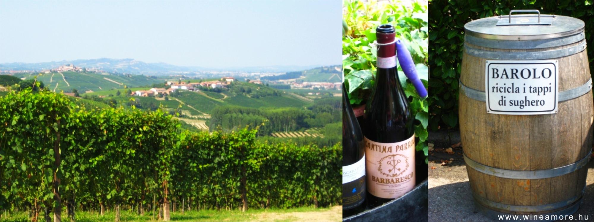 Piemonti gasztro- és bortúra